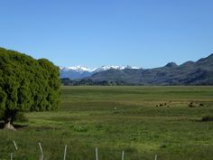 Linda DV (back again) posted a photo:  Argentina. Patagonia.  Chubut Province.  Taken from the bus on our way to Los Alerces National park.