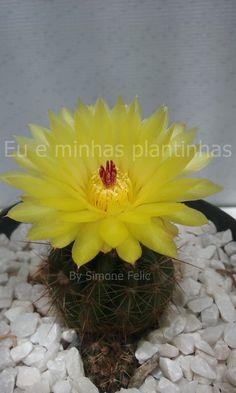 http://www.eueminhasplantinhas.com/