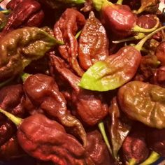 Ah, what better way to celebrate this #ChocolateDay than with #chocolate #ghostpeppers!   www.ghostpepperZ.com #nationalchocolateday  #ghostpepperZ