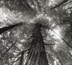 - ¿Cómo se siente? Me pregunto - Es como tirarse en la hierba bajo los árboles y sentir que los rayos de luz que traspasan las ramas, traspasan también tu piel, se almacenan en tu corazón, concentrándote en lo cálido que se siente, la temperatura se esparce por tu cuerpo, llenando el vacío de tu corazón que nada había podido llenar, y es cuando, por fin, nada puede interrumpir el cerrar de tus ojos. By: Mar..!