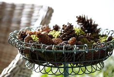 Mosquito-Repelling Pinecones – One Kings Lane — Our Style Blog Garden Mum, Love Garden, Rustic Baskets, Garden Pests, Outdoor Parties, Nature Decor, Natural Oil, Wire Work, Love Home