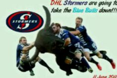 Go Stormers!!
