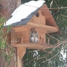 Squirrel Penthouse.(done)