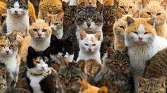 Alpacas, monkeys and cat island: best animal photos of 2015 - Trending - CBC News