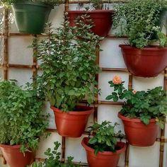 Lindeza de hortinha/ jardim vertical ❤🌷❤🌷❤🌷 ❤🌷❤😘❤🌷🌱❤🌷🌷🌷🌷🌷🌷🌷🌷🌱🌷🌱🌷🌱🌷 #hortaemvasos #hortaurbana #hortaemapartamento #instagarden  #reciclagemcriativa #hortacaseira  #flores #flowers #instanature #instagarden #coentro #cilantro #caixotedefeira #gardener  #encontrandoideias #reaproveitar #minhahorta #jardimvertical #decoracaocriativa #reciclagem #splendid_nature #huertaurbana #garrafaspet #sustentabilidade #homedecor #instadecor #ecodesign #pallets #decoracaosustentavel…