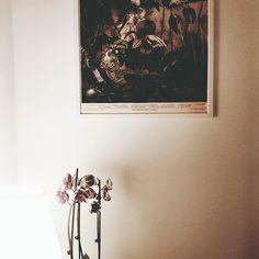 #orchid #orchis #storczyk #kwiaty #storczyki #interior #plakat #poster #kwiatki #kwiatywdomu #bukiet #lightandshadow #światło #cień #igerswarsaw