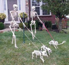Where the heck do you get Boston Terrier skeletons?