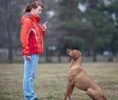 Gracias a la disciplina puedes evitarte una cantidad increíble de problemas de comportamiento, desde algo tan tonto como ladrar al mínimo ruido hasta la agresividad?¿Y por qué? Porque el perro lo necesita, simplemente. Completa aquí la información...