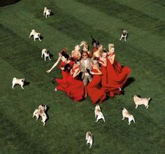Valentino's Pug Entourage