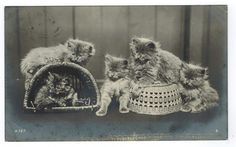Five Kittens Playing Rotary Photo [100017] - $6.00 : Old Postcards In Time, Online source for old and antique postcards