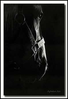 The Scratchboard Art of Cathy Sheeter - The Patriarch