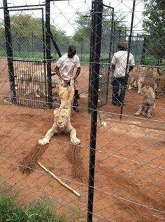 Обычный день в Африке