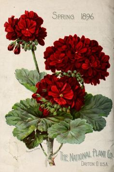 Back cover of 'The National Plant Co's' Spring 1896 catalogue with an…