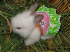 What's cuter than cats in clothes?? Bunnies in clothes!!!