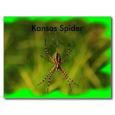 Kansas Garden Spider POST CARD
