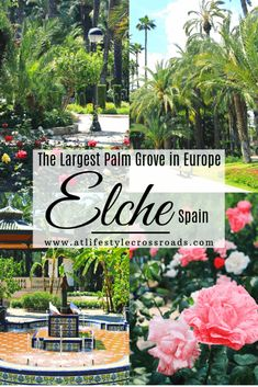 It is hard to imagine 200 000 palms in the heart of Europe. You can´t miss El Palmeral, located in the city of Elche, Valencia (Province) Europe Travel Guide, Europe Destinations, Spain Travel, Amazing Destinations, Portugal Travel, Beautiful Places In Spain, Malta, Heart Of Europe, Spain And Portugal