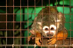 Why YOU Should NOT Support Zoos