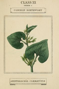 https://flic.kr/p/g62qPF | n224_w1150 | Elements of the science of botany,. London,Printed by T. Bensley for J. Murray.1812.. biodiversitylibrary.org/page/4843910