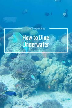 Looking for a unique way to enjoy a meal? How about dining underwater? Check out 5.8 at Hurawalhi in the Maldives. Yes, that means dining 5.8 meters underwater!