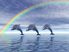 Image detail for -Dolphins with rainbow   Free wallpapers, Free HD Images ... look closely in upper left hand corner its a DOUBLE rainbow!