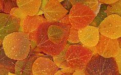 fall leaves drop water macro wallpaper full hd desktop