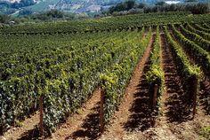 Vigneti come giardini, che si estendono per oltre 3.000 ettari in un territorio ideale. Perché ideale? Perché qui, da sempre, si fa vino.