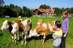 Schönegger Käse-Alm & Pfaffenwinkler Milchweg - Wandern mit Kinder in Garmisch-Partenkirchen. Ein toller Familienausflug. Kinderwagentauglich