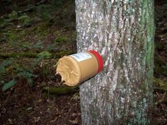 Very cool trick to use to attract deer. Just remove lid and nail to the tree, cut bottom off the peanut butter jar, then screw jar back on the lid nailed to the tree.
