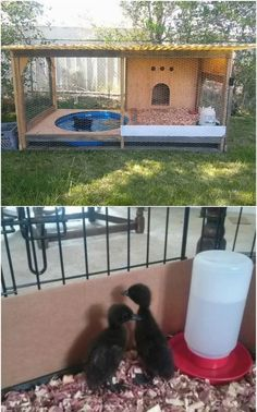 Our chicken coop inf