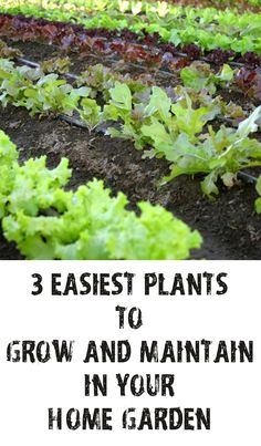 Three Easiest Plants to Grow and Maintain in Your Home Garden