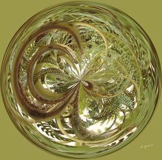 Amazing Circle - Fern.  Copyright Nancy Kirkpatrick Photography