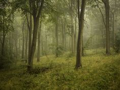 Wendover Woods by Damian Ward Wendover Woods, British Wildlife, Summer Sky, Dark Forest, Vsco Grid, Adventure Time, Woodland, Nature Photography, Country Roads