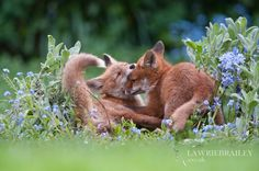 Sneak Attack by Lawrie Brailey on 500px