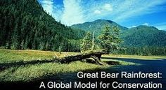 WE have to Save The Great Bear Rainforest and the Great Bear Sea!!!!To beautiful to loose to dirty oil and tankers!!!