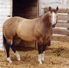 Skips Napoleon, American Quarter Horse from Skipper W line.