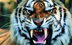 He wants it we eat!!!!!!!!!!!!!!!!