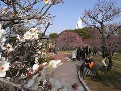 Where to find plum blossoms in Kansai