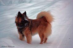 Zalto in the snow!