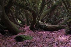 The lost garden of Heligan in Cornwall, England