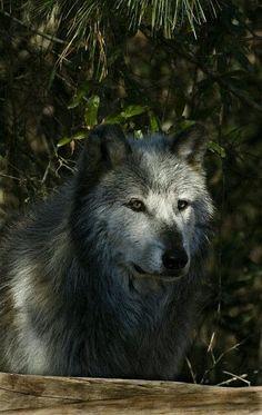 Mundo lobo – Kolekcje – Google+