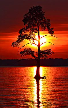 Sunset and tree in a lake