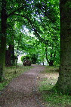 Wooded path, image