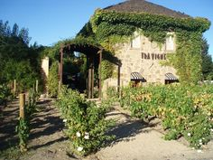 See 5 photos from 20 visitors to Travigne. Napa Map, Places In California, California Wine, Places To Travel, Places To Go, Provence, Sonoma Wine Country, Sonoma Coast, Cool Restaurant