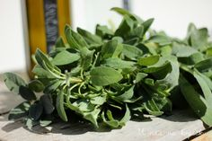 Šalvějový sirup Spinach, Vegetables, Plants, Syrup, Vegetable Recipes, Flora, Plant, Planting