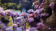 Colorful ocean😍 #ocean #oceanlover #lookingfornemo #londonaquarium #aquarium #londonseaworld #seaworld #oceanworld #colorful #pinit #pinteresting #beautifulnature #follow #london #londonvisit