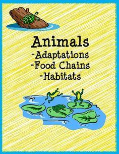 Animals: adaptations, food chains & habitats