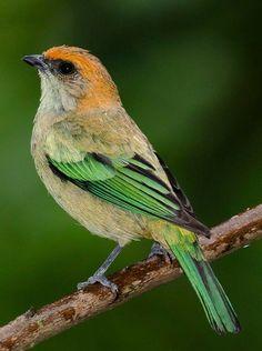 Different Birds, Kinds Of Birds, Birds 2, Cute Birds, Pretty Birds, Beautiful Birds, Exotic Birds, Colorful Birds, Loro Animal