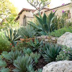 Low Water Landscape Design Ideas, Pictures, Remodel and Decor