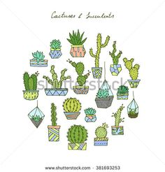 Vector hand drawn cactuses and succulents.