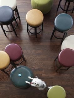 'Zac and Pier 1 Stratmoor Swivel Barstools and Counterstools